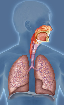 Prevention of respiratory system diseases